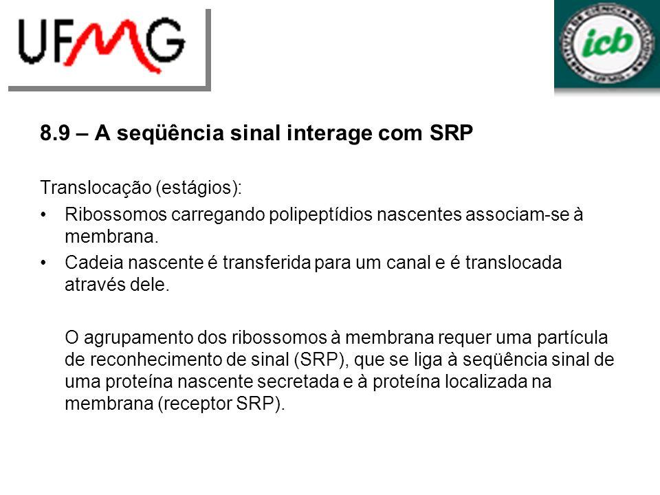 8.9 – A seqüência sinal interage com SRP Translocação (estágios): Ribossomos carregando polipeptídios nascentes associam-se à membrana. Cadeia nascent