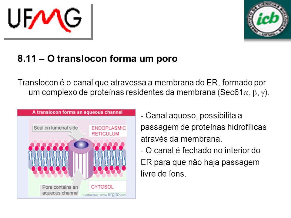 8.11 – O translocon forma um poro Translocon é o canal que atravessa a membrana do ER, formado por um complexo de proteínas residentes da membrana (Se