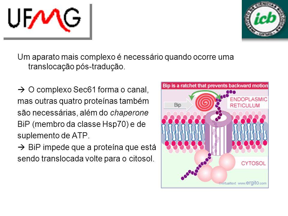 Um aparato mais complexo é necessário quando ocorre uma translocação pós-tradução. O complexo Sec61 forma o canal, mas outras quatro proteínas também