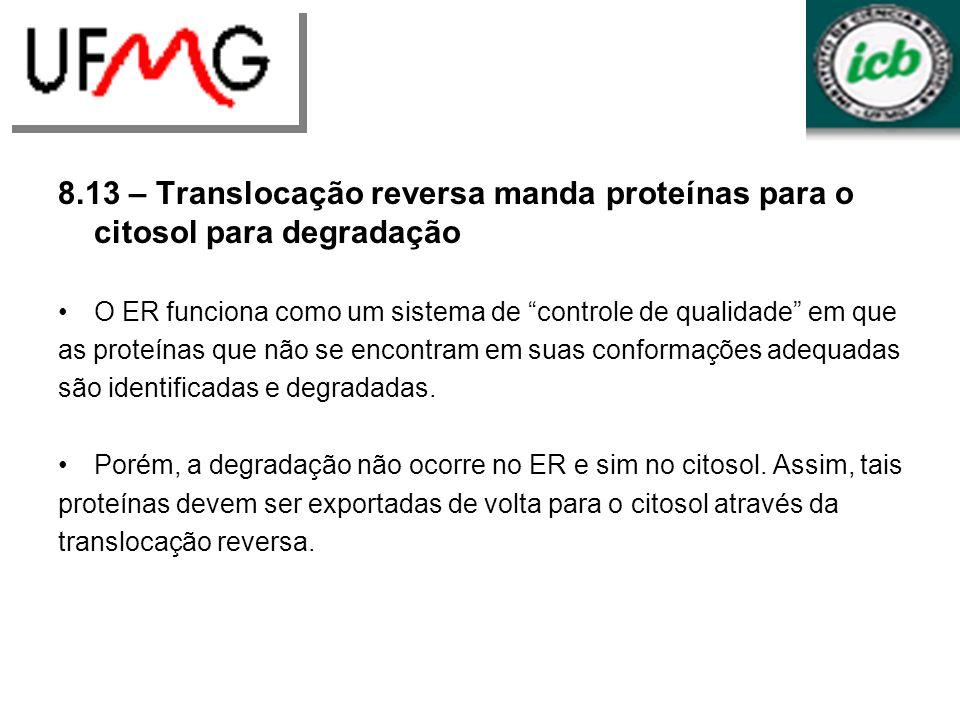 8.13 – Translocação reversa manda proteínas para o citosol para degradação O ER funciona como um sistema de controle de qualidade em que as proteínas