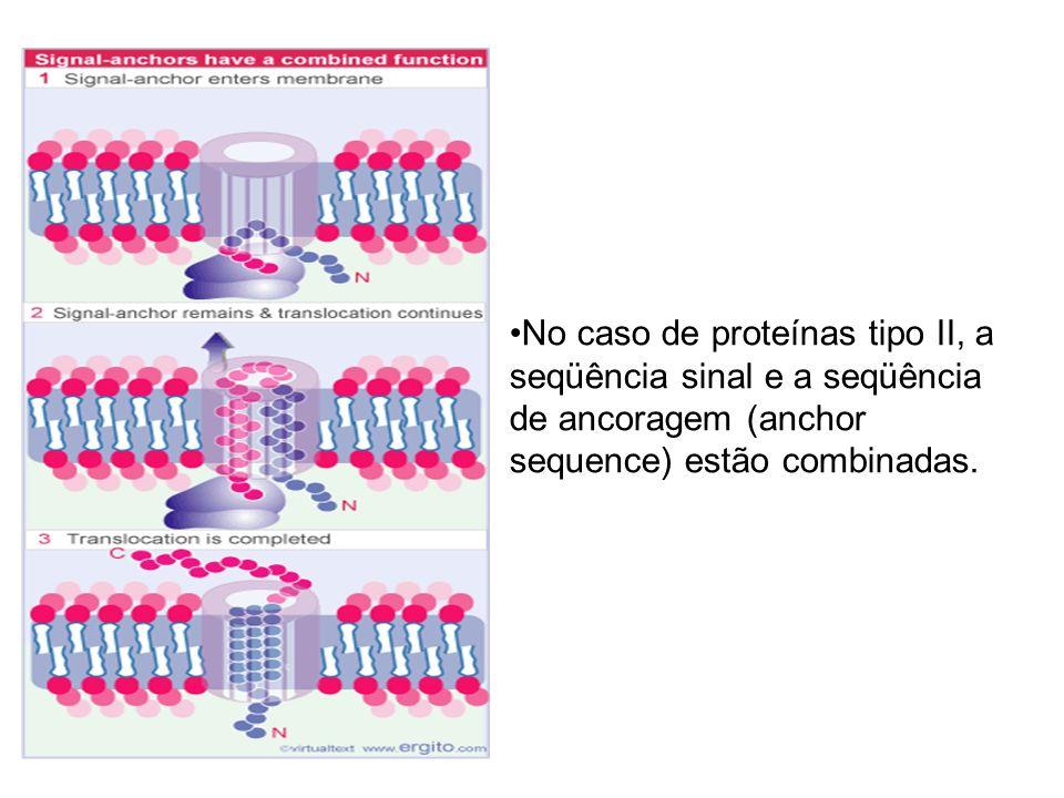 No caso de proteínas tipo II, a seqüência sinal e a seqüência de ancoragem (anchor sequence) estão combinadas.