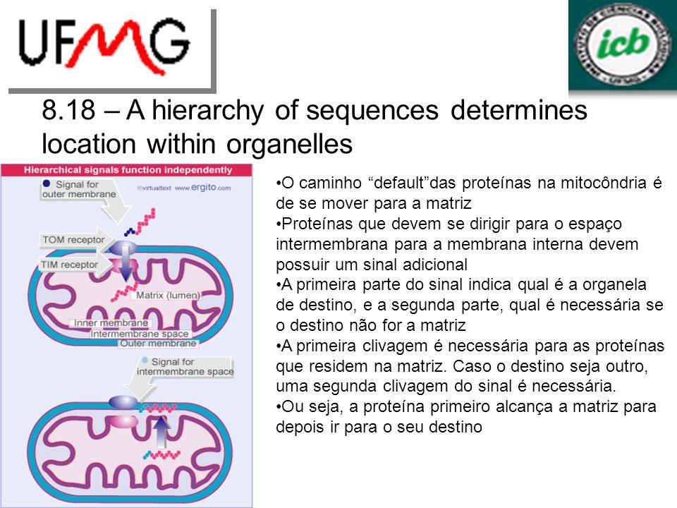 8.18 – A hierarchy of sequences determines location within organelles O caminho defaultdas proteínas na mitocôndria é de se mover para a matriz Proteí