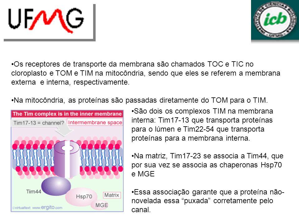 Os receptores de transporte da membrana são chamados TOC e TIC no cloroplasto e TOM e TIM na mitocôndria, sendo que eles se referem a membrana externa
