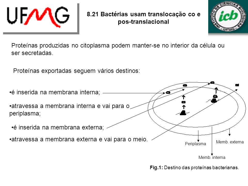 Periplasma Memb. externa Memb. interna Fig.1: Destino das proteínas bacterianas. 8.21 Bactérias usam translocação co e pos-translacional Proteínas pro