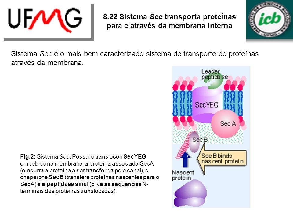 8.22 Sistema Sec transporta proteínas para e através da membrana interna Sistema Sec é o mais bem caracterizado sistema de transporte de proteínas atr