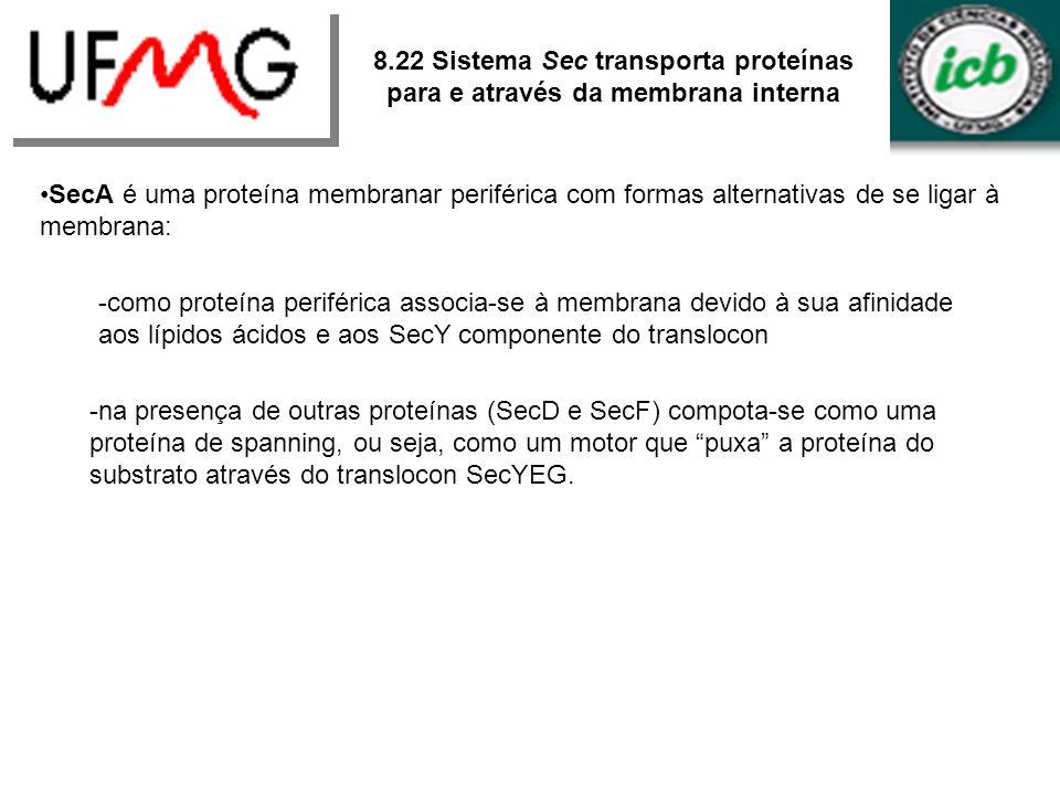 SecA é uma proteína membranar periférica com formas alternativas de se ligar à membrana: -como proteína periférica associa-se à membrana devido à sua