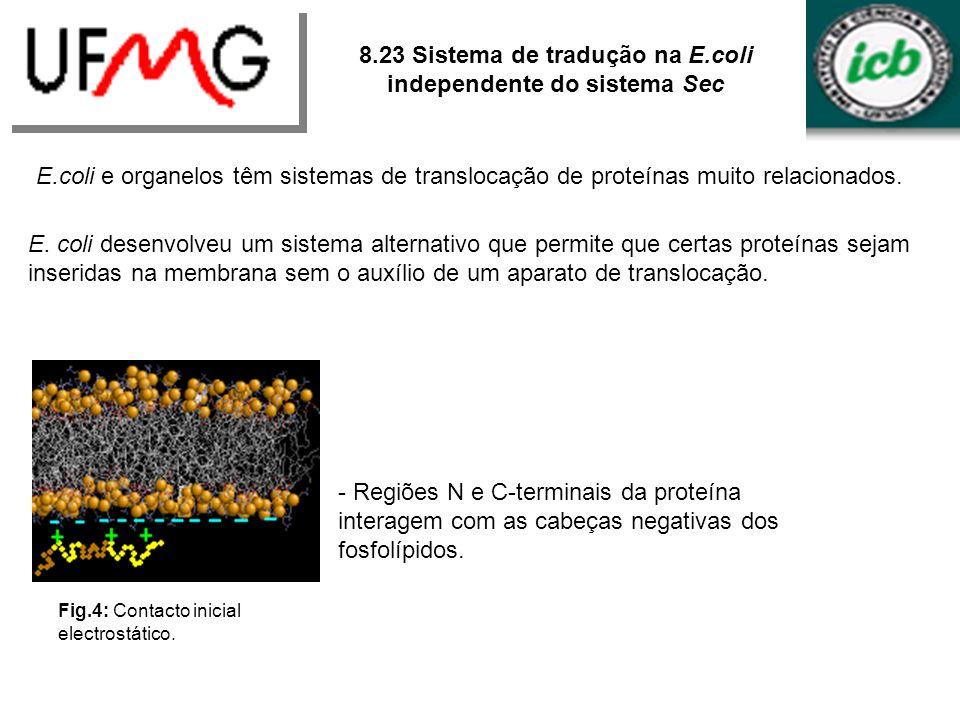 8.23 Sistema de tradução na E.coli independente do sistema Sec E.coli e organelos têm sistemas de translocação de proteínas muito relacionados. E. col