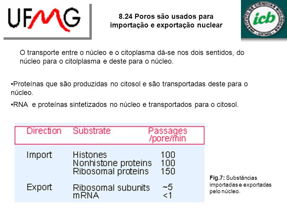 8.24 Poros são usados para importação e exportação nuclear O transporte entre o núcleo e o citoplasma dá-se nos dois sentidos, do núcleo para o citolp