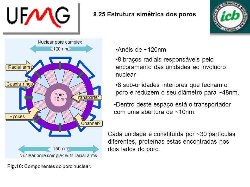 8.25 Estrutura simétrica dos poros Fig.10: Componentes do poro nuclear. Anéis de ~120nm 8 braços radiais responsáveis pelo ancoramento das unidades ao