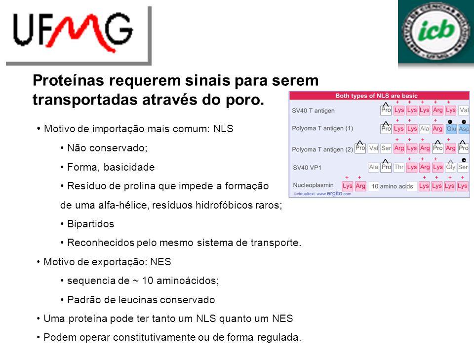 URLGA Proteínas requerem sinais para serem transportadas através do poro. Motivo de importação mais comum: NLS Não conservado; Forma, basicidade Resíd