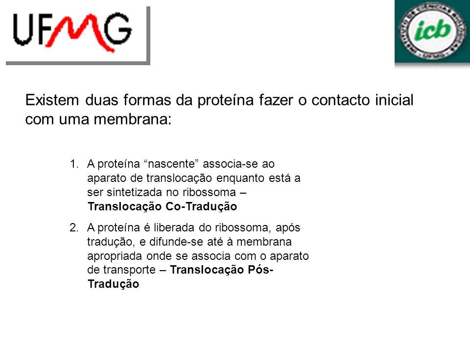 Existem duas formas da proteína fazer o contacto inicial com uma membrana: 1.A proteína nascente associa-se ao aparato de translocação enquanto está a