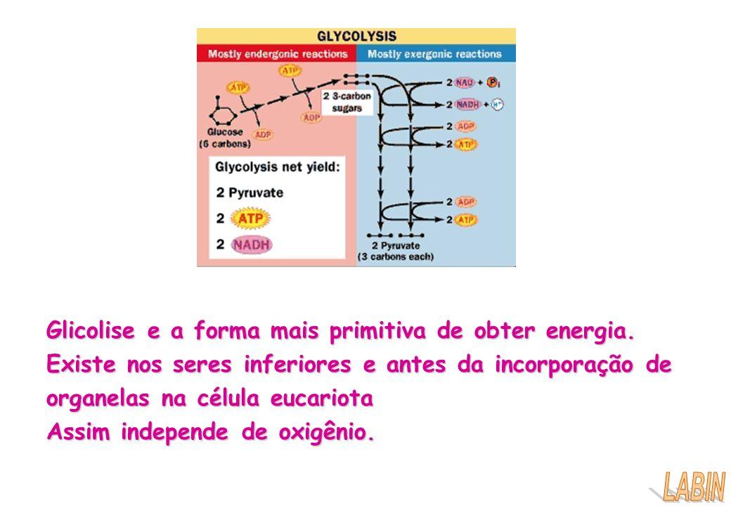 Glicolise e a forma mais primitiva de obter energia. Existe nos seres inferiores e antes da incorporação de organelas na célula eucariota Assim indepe
