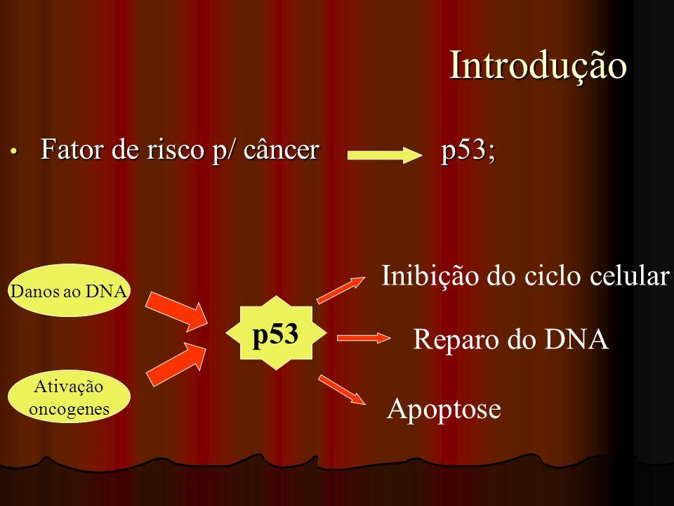 Introdução Introdução Inibição do ciclo celular Reparo do DNA Apoptose Danos ao DNA Ativação oncogenes p53 Fator de risco p/ câncer p53; Fator de risc