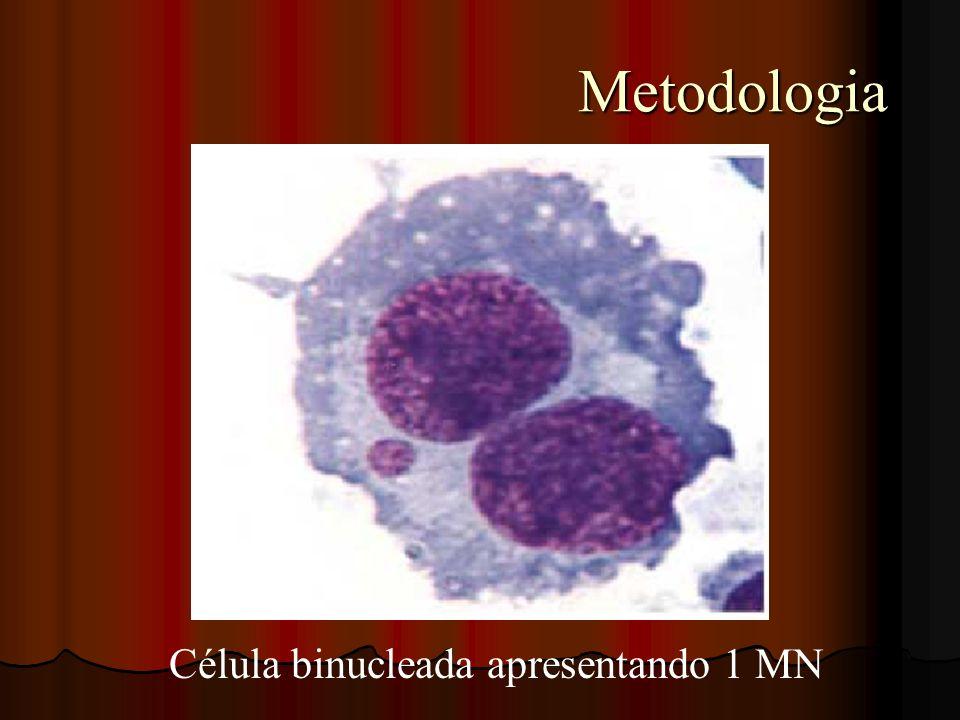 Metodologia Metodologia Célula binucleada apresentando 1 MN