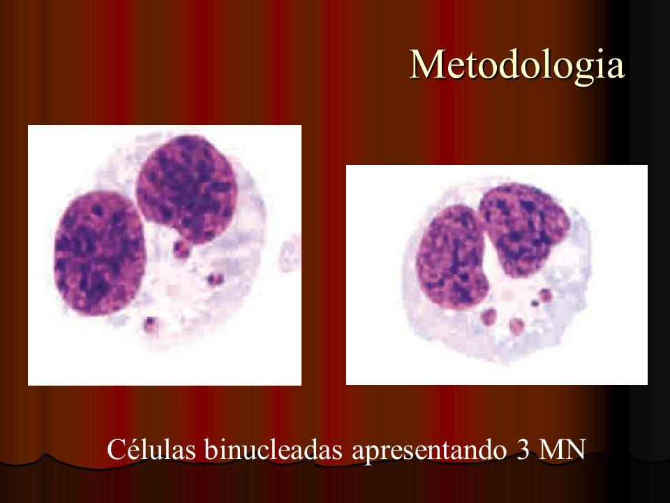 Metodologia Metodologia Células binucleadas apresentando 3 MN