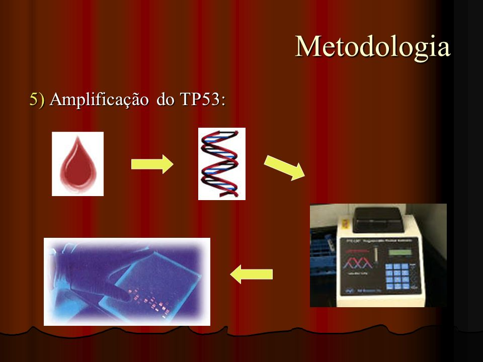 Metodologia Metodologia 5) Amplificação do TP53: