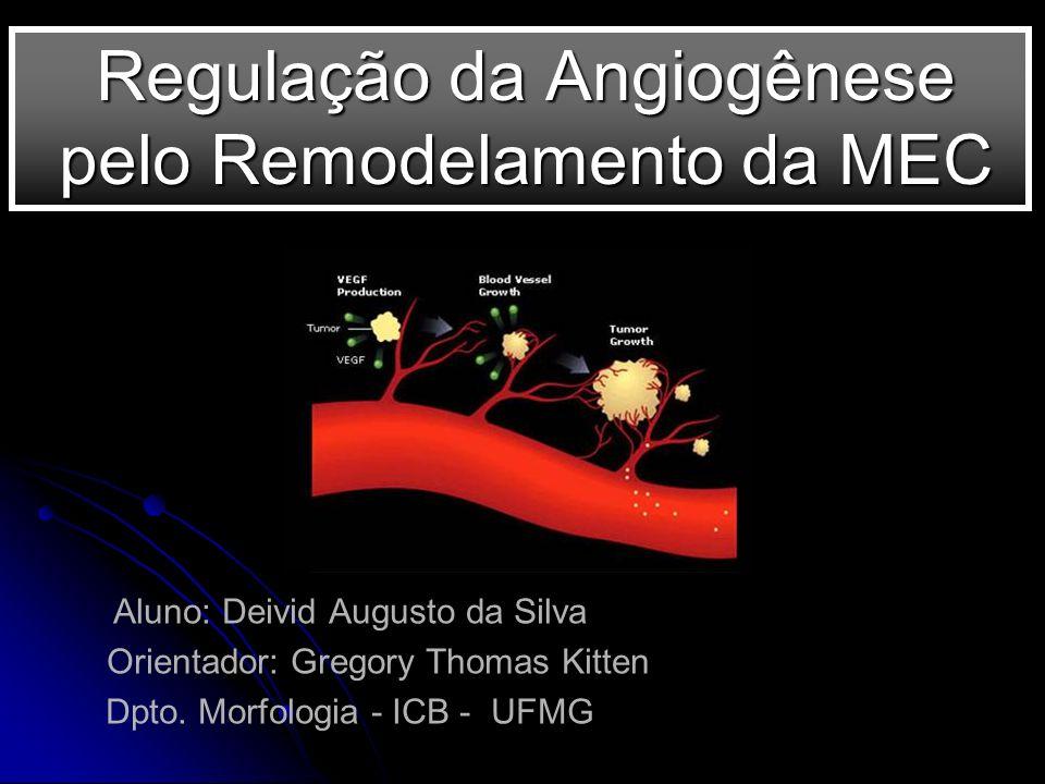 Regulação da Angiogênese pelo Remodelamento da MEC Aluno: Deivid Augusto da Silva Orientador: Gregory Thomas Kitten Dpto. Morfologia - ICB - UFMG