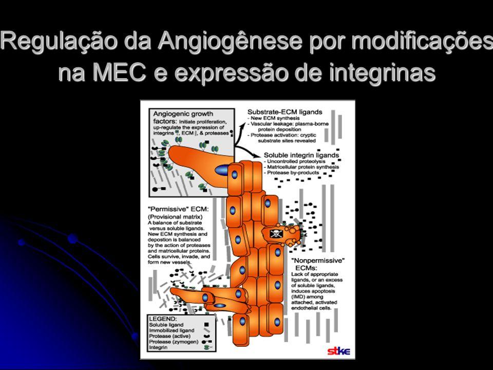 Regulação da Angiogênese por modificações na MEC e expressão de integrinas