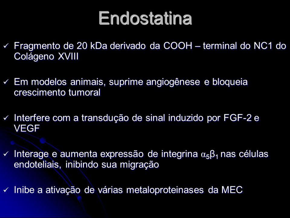 Endostatina Fragmento de 20 kDa derivado da COOH – terminal do NC1 do Colágeno XVIII Fragmento de 20 kDa derivado da COOH – terminal do NC1 do Colágen