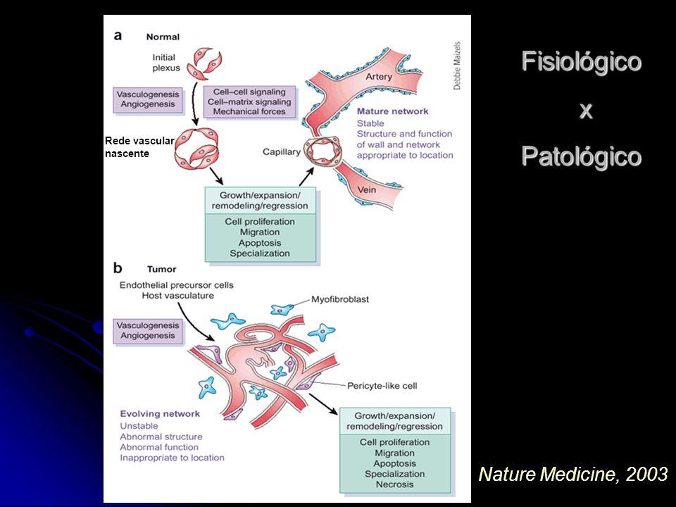 Nature Medicine, 2003 Fisiológico xPatológico Rede vascular nascente