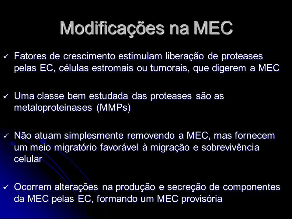 Modificações na MEC Fatores de crescimento estimulam liberação de proteases pelas EC, células estromais ou tumorais, que digerem a MEC Fatores de cres