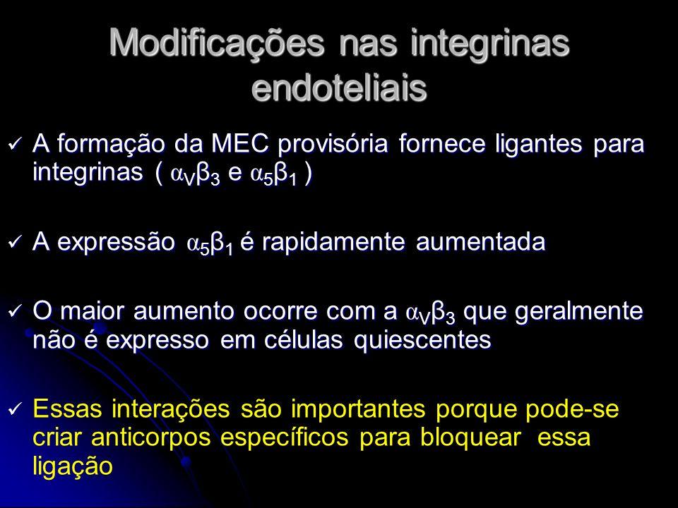 Modificações nas integrinas endoteliais A formação da MEC provisória fornece ligantes para integrinas ( α V β 3 e α 5 β 1 ) A formação da MEC provisór