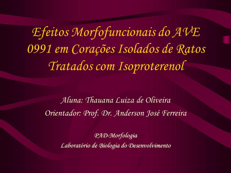 Efeitos Morfofuncionais do AVE 0991 em Corações Isolados de Ratos Tratados com Isoproterenol Aluna: Thauana Luiza de Oliveira Orientador: Prof.