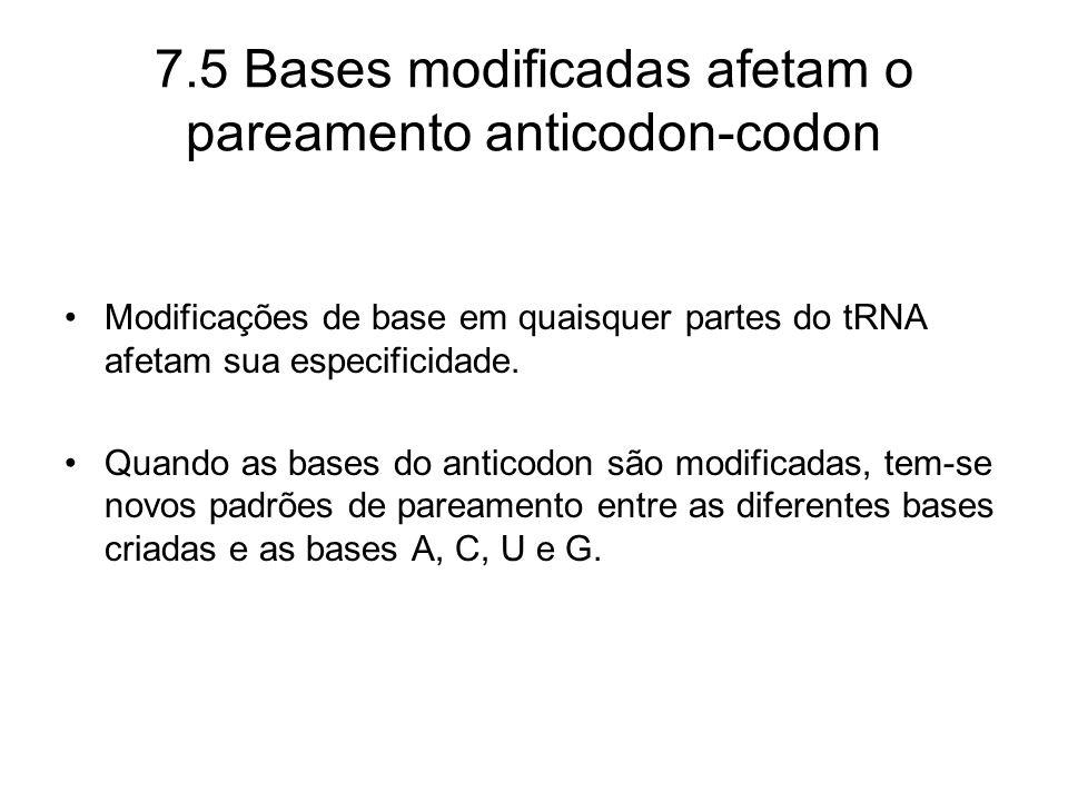 7.5 Bases modificadas afetam o pareamento anticodon-codon Modificações de base em quaisquer partes do tRNA afetam sua especificidade. Quando as bases