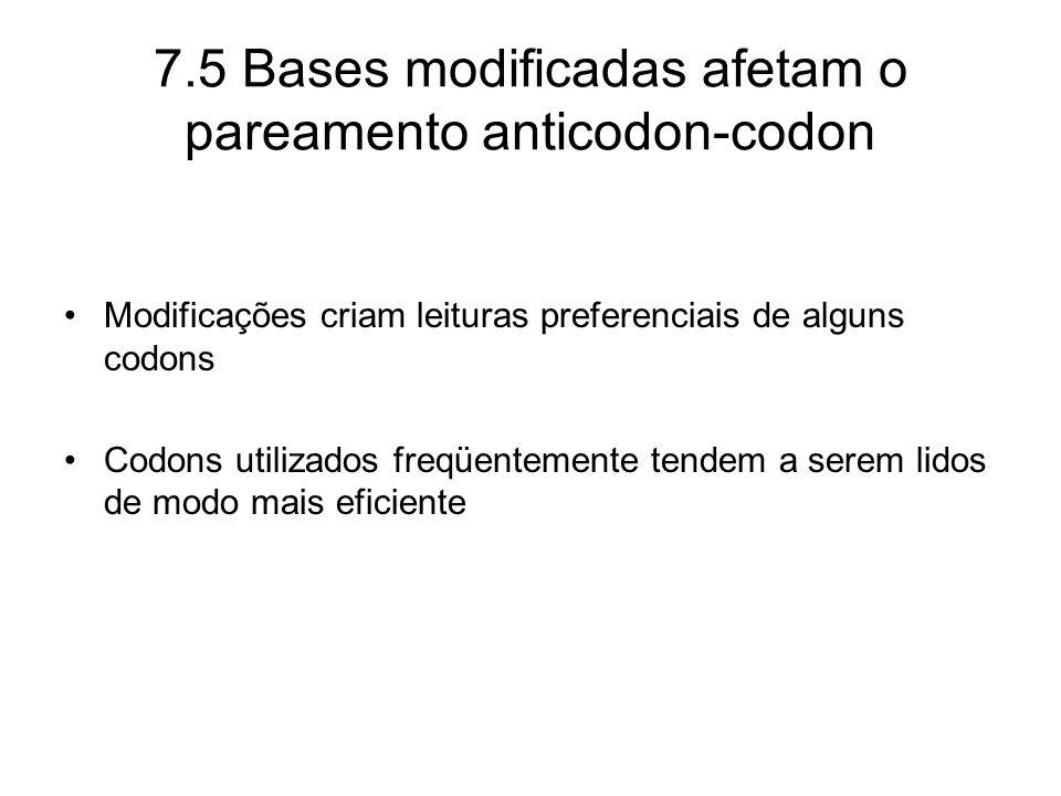 Modificações criam leituras preferenciais de alguns codons Codons utilizados freqüentemente tendem a serem lidos de modo mais eficiente 7.5 Bases modi
