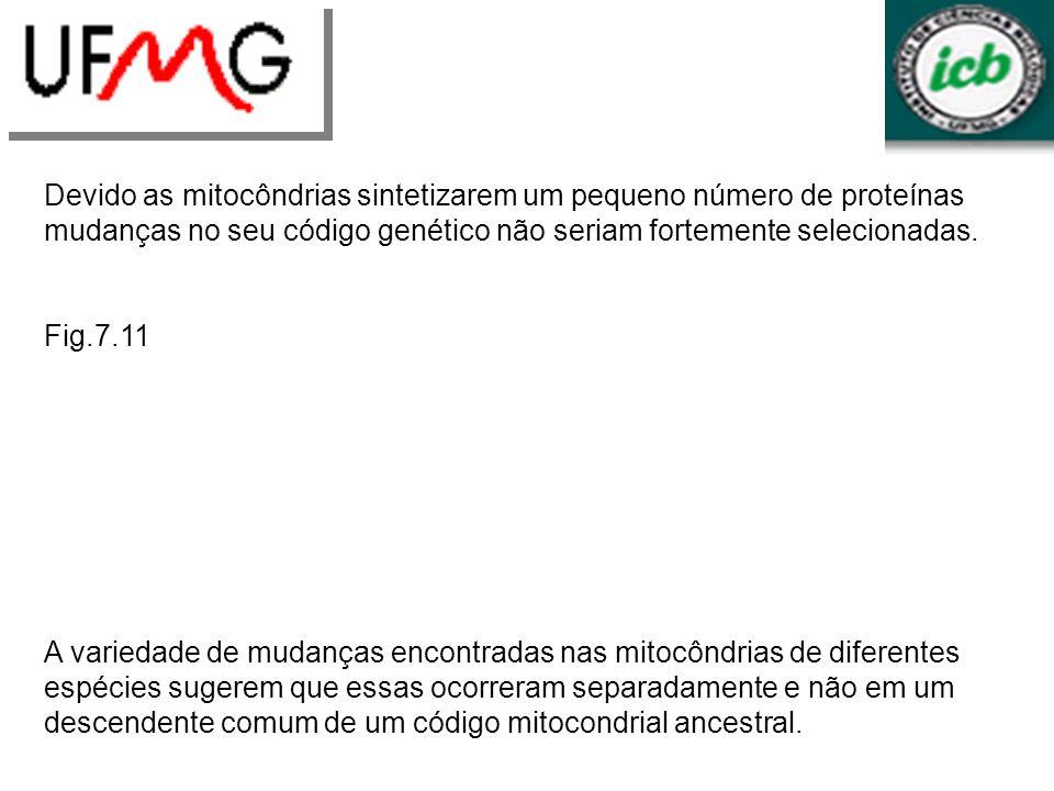 Devido as mitocôndrias sintetizarem um pequeno número de proteínas mudanças no seu código genético não seriam fortemente selecionadas. Fig.7.11 A vari