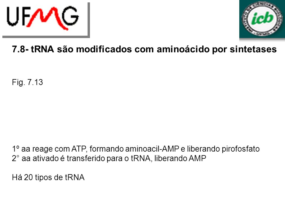 7.8- tRNA são modificados com aminoácido por sintetases Fig. 7.13 1º aa reage com ATP, formando aminoacil-AMP e liberando pirofosfato 2° aa ativado é
