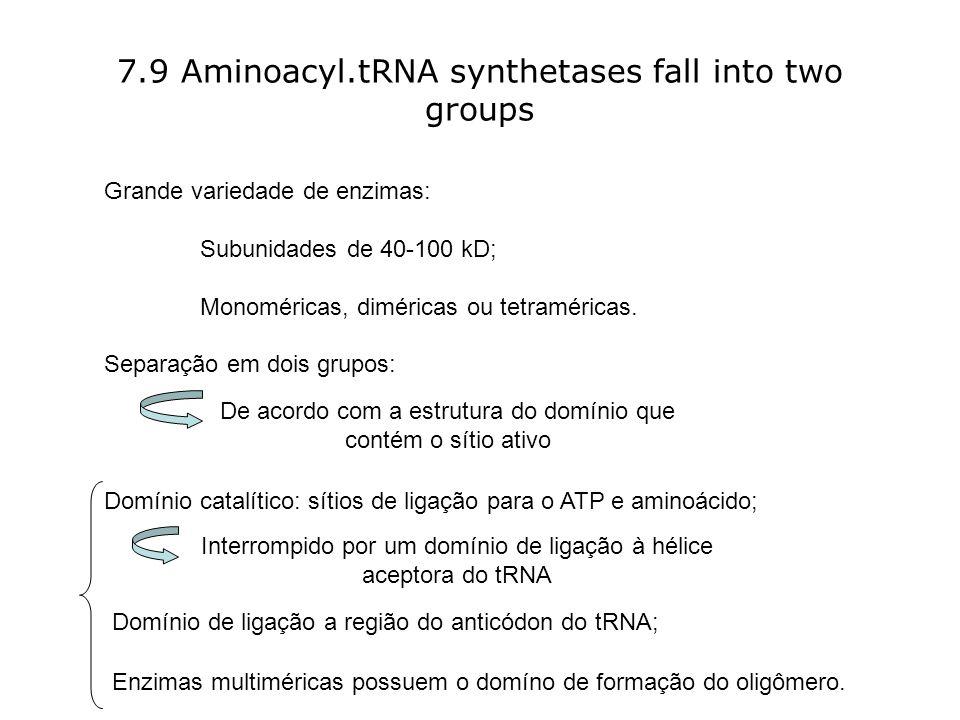 7.9 Aminoacyl.tRNA synthetases fall into two groups Grande variedade de enzimas: Subunidades de 40-100 kD; Monoméricas, diméricas ou tetraméricas.