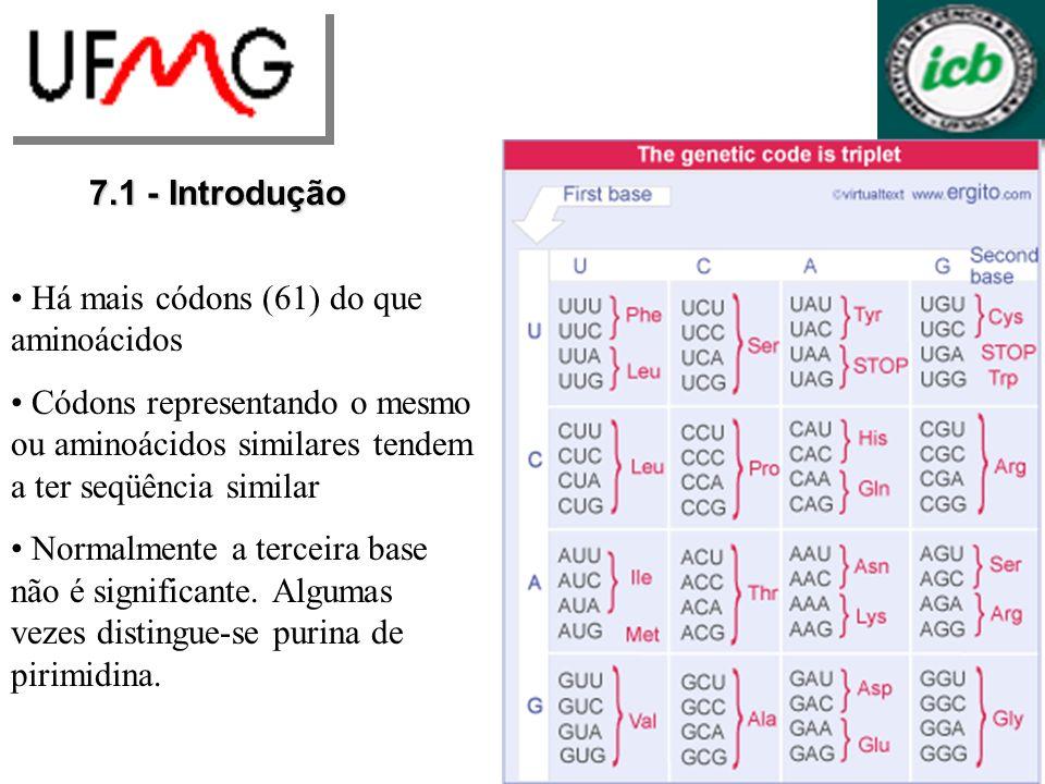 7.1 - Introdução Há mais códons (61) do que aminoácidos Códons representando o mesmo ou aminoácidos similares tendem a ter seqüência similar Normalmente a terceira base não é significante.