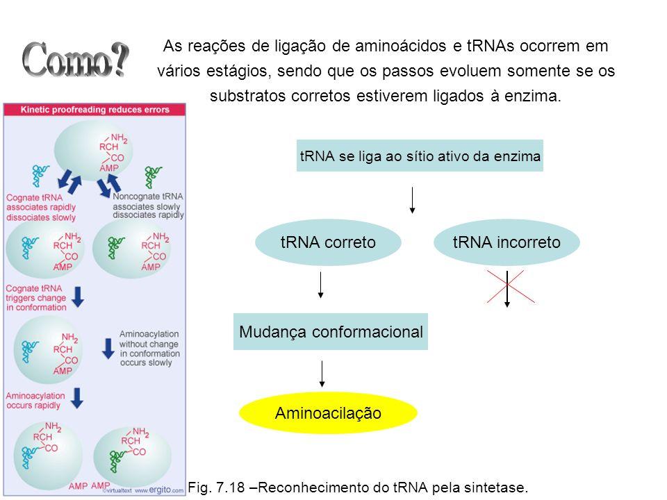 As reações de ligação de aminoácidos e tRNAs ocorrem em vários estágios, sendo que os passos evoluem somente se os substratos corretos estiverem ligad