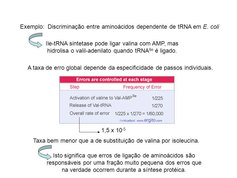 Exemplo:Discriminação entre aminoácidos dependente de tRNA em E.