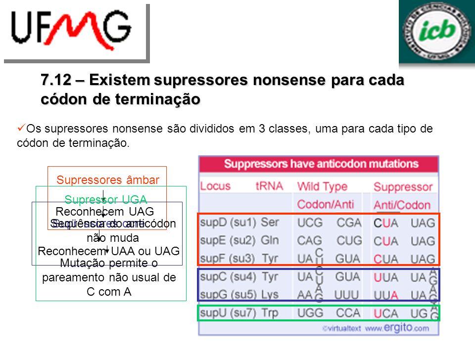 7.12 – Existem supressores nonsense para cada códon de terminação Os supressores nonsense são divididos em 3 classes, uma para cada tipo de códon de t