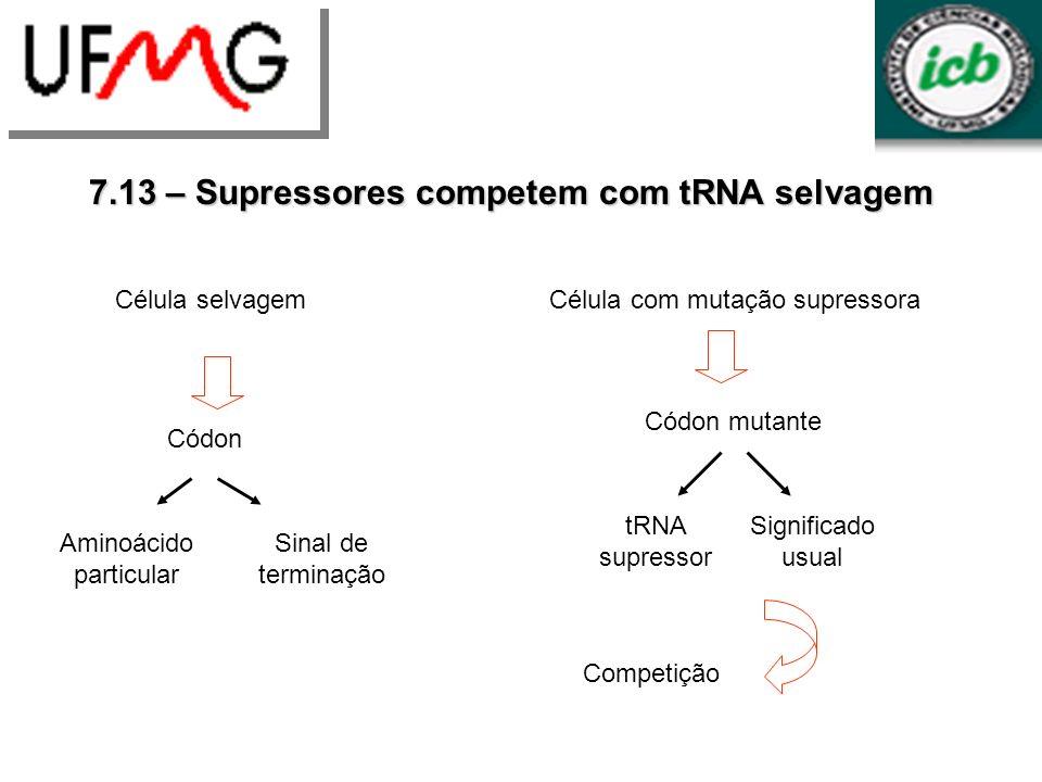 7.13 – Supressores competem com tRNA selvagem Célula selvagem Códon Aminoácido particular Sinal de terminação Célula com mutação supressora Códon muta