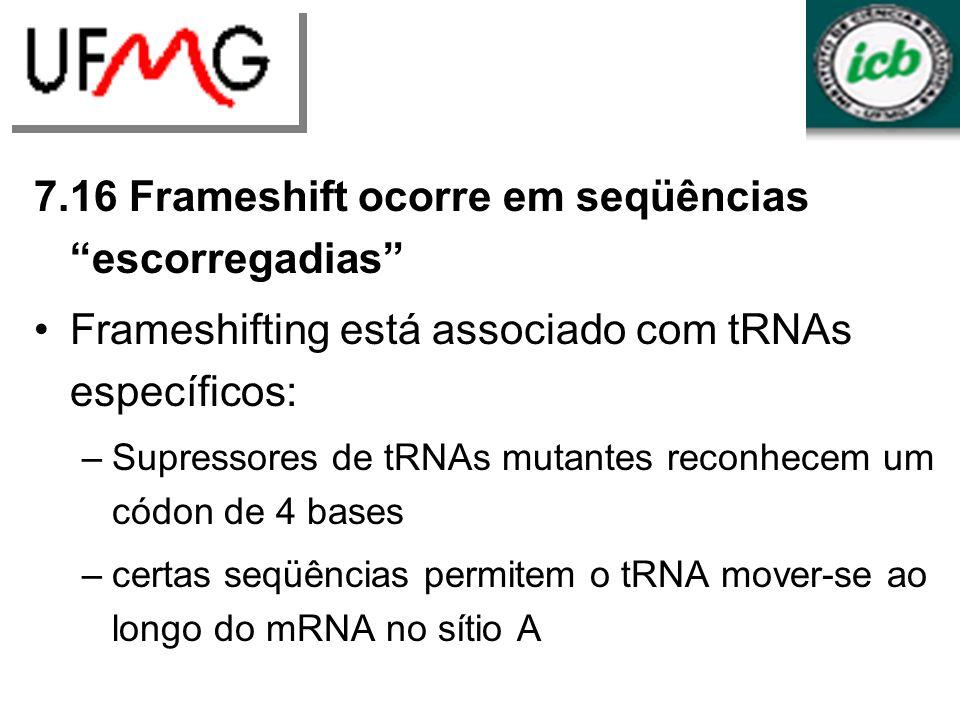 7.16 Frameshift ocorre em seqüências escorregadias Frameshifting está associado com tRNAs específicos: –Supressores de tRNAs mutantes reconhecem um códon de 4 bases –certas seqüências permitem o tRNA mover-se ao longo do mRNA no sítio A Mutações por frameshift ocorrem pela inserção ou deleção de uma base e podem ser suprimidas restaurando a fase de leitura original O tipo mais simples de supressor de frameshift corrige a fase de leitura quando houve uma inserção em um trecho de bases repetidas