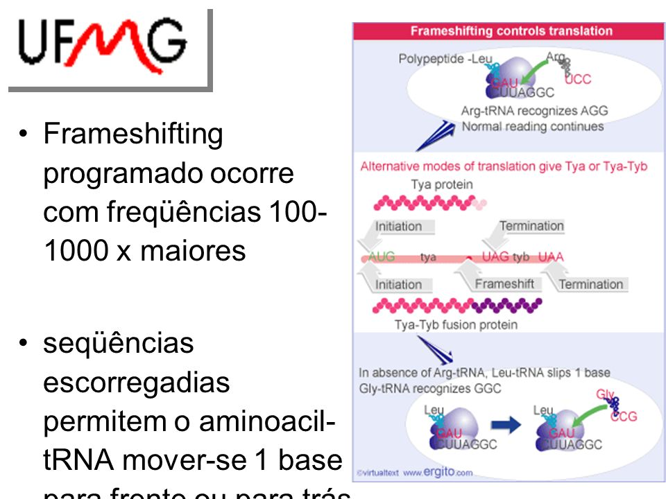 Frameshifting programado ocorre com freqüências 100- 1000 x maiores seqüências escorregadias permitem o aminoacil- tRNA mover-se 1 base para frente ou para trás o ribossomo é atrasado para permitir o rearranjo