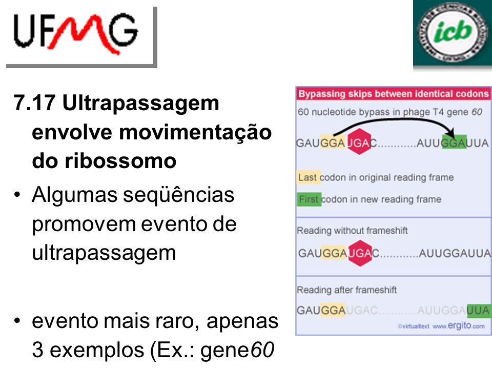 7.17 Ultrapassagem envolve movimentação do ribossomo Algumas seqüências promovem evento de ultrapassagem evento mais raro, apenas 3 exemplos (Ex.: gene60 do fago T4) códons idênticos nas extremidades da seqüência omitida