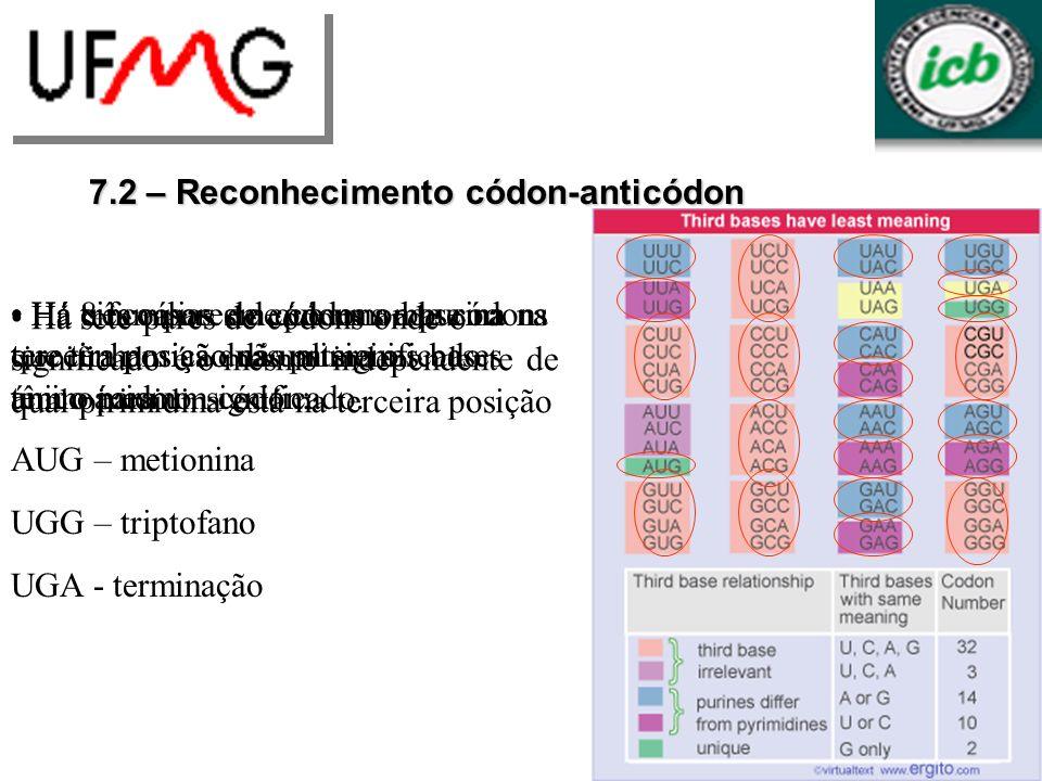 Modificações criam leituras preferenciais de alguns codons Codons utilizados freqüentemente tendem a serem lidos de modo mais eficiente 7.5 Bases modificadas afetam o pareamento anticodon-codon