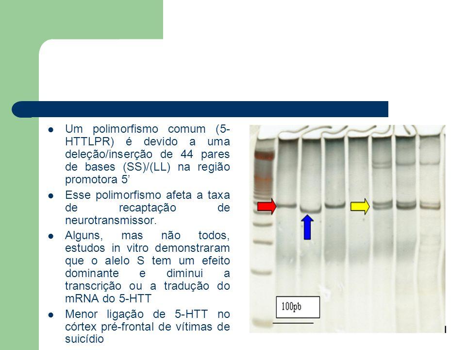Um polimorfismo comum (5- HTTLPR) é devido a uma deleção/inserção de 44 pares de bases (SS)/(LL) na região promotora 5 Esse polimorfismo afeta a taxa