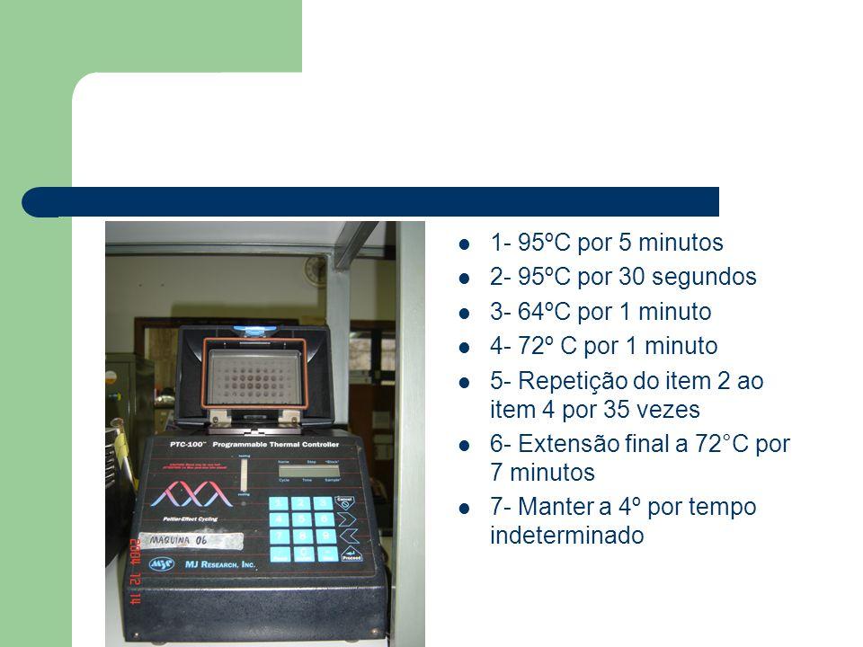 1- 95ºC por 5 minutos 2- 95ºC por 30 segundos 3- 64ºC por 1 minuto 4- 72º C por 1 minuto 5- Repetição do item 2 ao item 4 por 35 vezes 6- Extensão fin