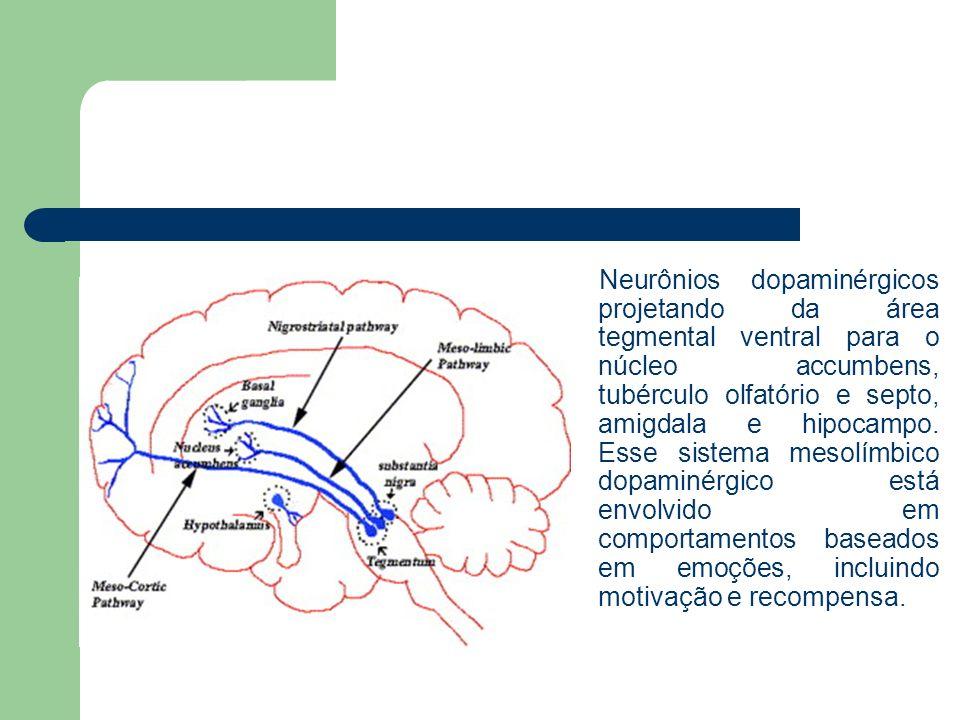 Neurônios dopaminérgicos projetando da área tegmental ventral para o núcleo accumbens, tubérculo olfatório e septo, amigdala e hipocampo. Esse sistema