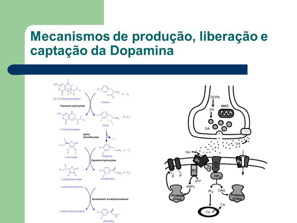 Mecanismos de produção, liberação e captação da Dopamina
