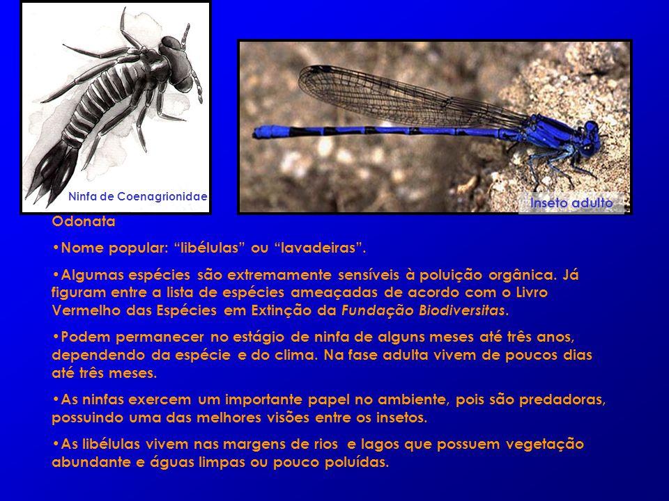 Odonata Nome popular: libélulas ou lavadeiras. Algumas espécies são extremamente sensíveis à poluição orgânica. Já figuram entre a lista de espécies a