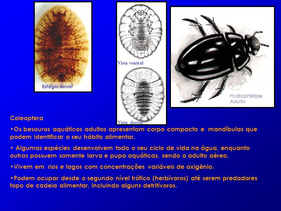 Coleoptera Os besouros aquáticos adultos apresentam corpo compacto e mandíbulas que podem identificar o seu hábito alimentar. Algumas espécies desenvo