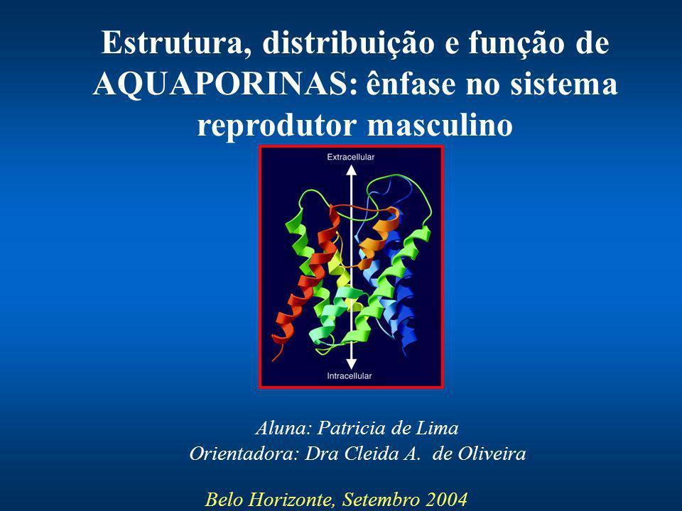 Aluna: Patricia de Lima Orientadora: Dra Cleida A. de Oliveira Belo Horizonte, Setembro 2004 Estrutura, distribuição e função de AQUAPORINAS: ênfase n