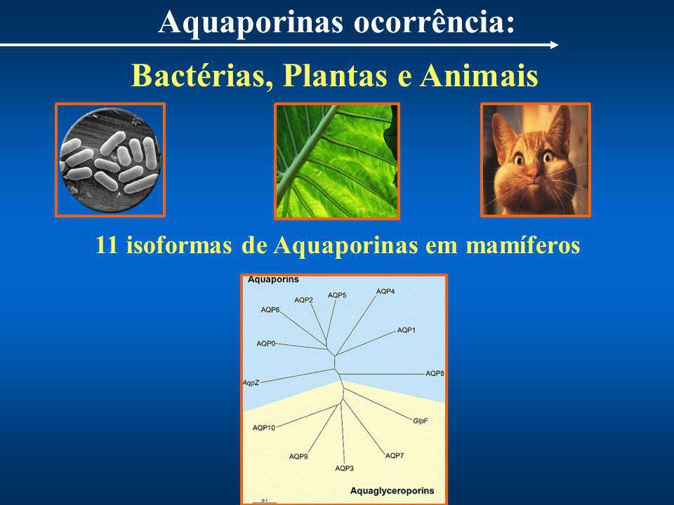 Aquaporinas ocorrência: 11 isoformas de Aquaporinas em mamíferos Bactérias, Plantas e Animais