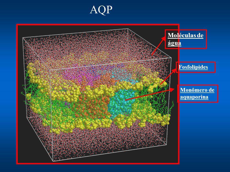 Fosfolípides Moléculas de água Monômero de aquaporina AQP